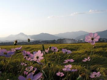 201004_shyimonogou.jpg