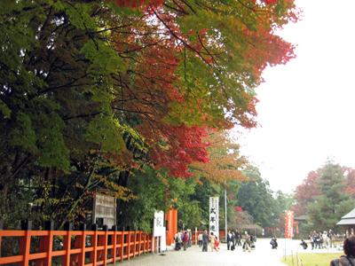 201116_kamigamo.jpg