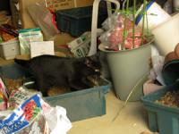 201221_cat2.jpg