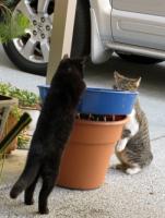 201221_cat.jpg