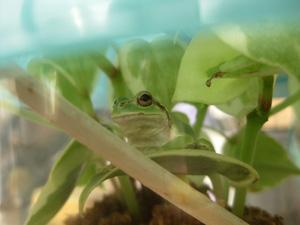 210322_frog.jpg