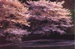 桜-02P 86t