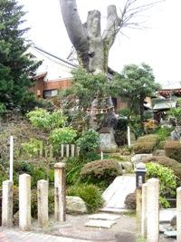垂井の泉とおおケヤキ