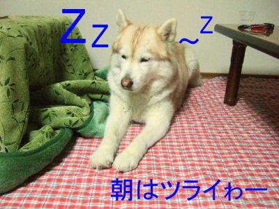 2006_01060003-1.jpg