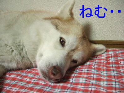 2006_01060014-1.jpg