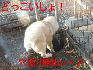 2006_02200016-1.jpg