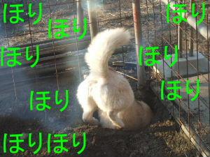 2006_02200017-1.jpg