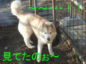 2006_02200018-1.jpg