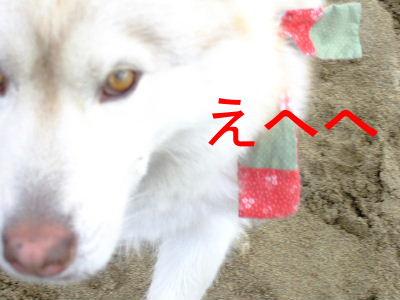 2006_0619-1.jpg