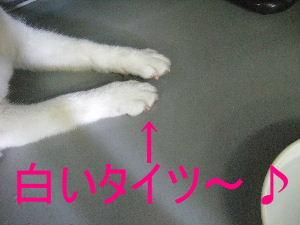 白いタイツ