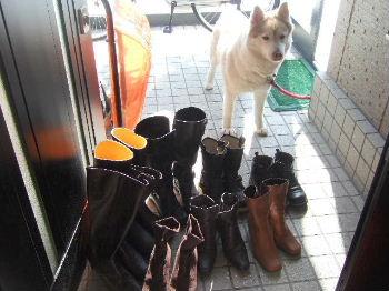 たくさんのブーツ