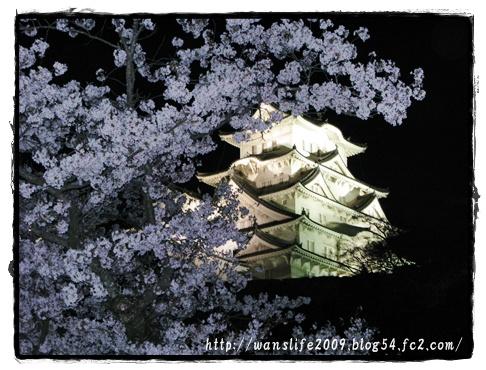 yozakura-15.jpg