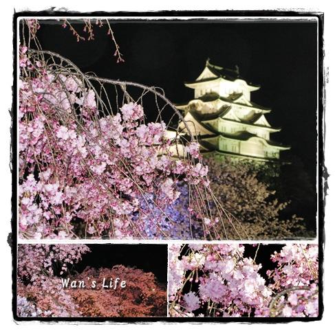 yozakura-9.jpg