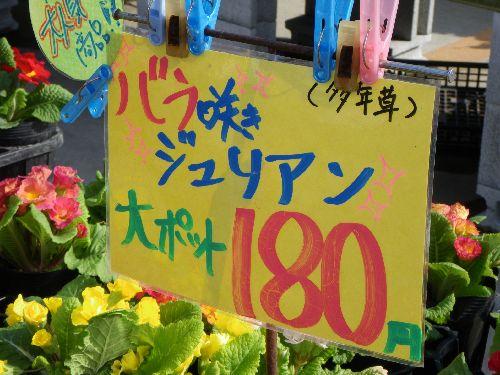 IMGP1059_20090308160925.jpg