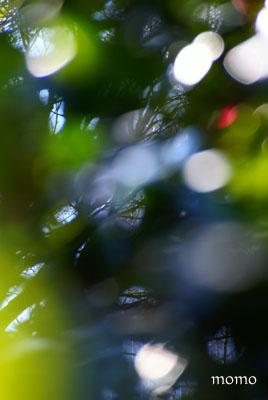 緑いろのひかり1