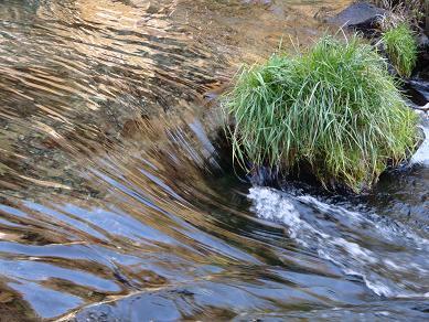 白糸滝 水流