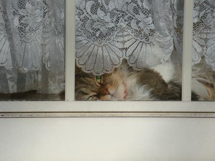 ペンションの看板猫ちゃん