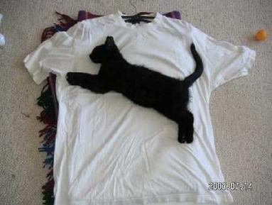 プーマのTシャツ?1