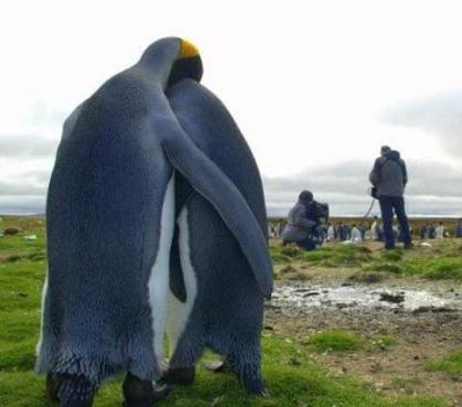 ペンギンカップル