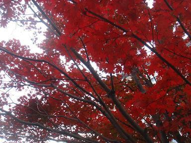 081020_kusatsu_10.jpg