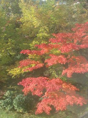 081021_kusatsu_01.jpg