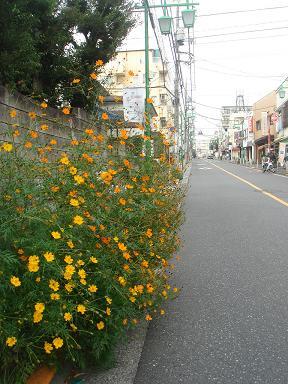 081026_satagaya_01.jpg