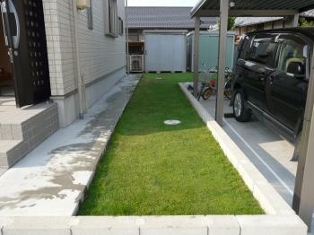 今回の芝生