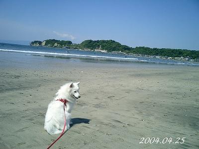 湘南の海デビュー