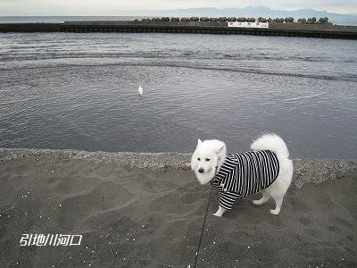 白鷺と白犬