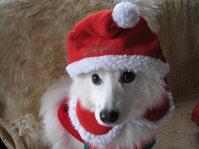 百妹もクリスマス!