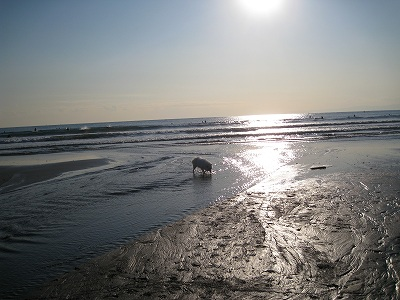 そしてあのビーチギャル