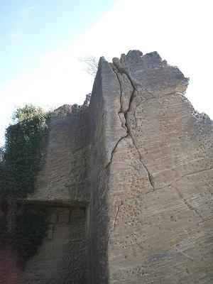 木の根が作る亀裂