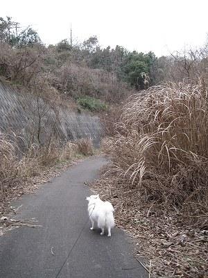 冬枯れの道