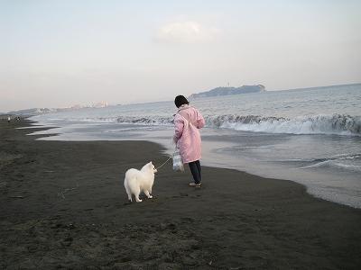 風景に溶け込んでる犬と飼い主