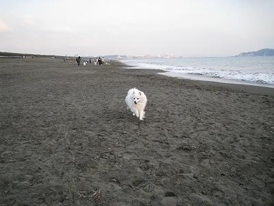 飼い主のもとに走る犬