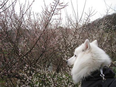 あ~ぁ、山歩きをしたいな。