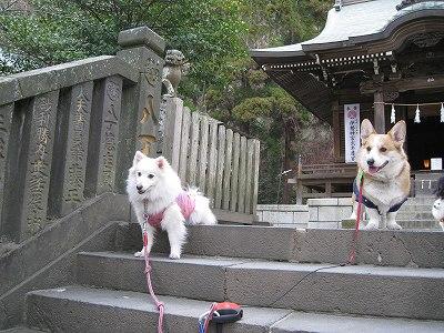モフ君&ルータロー君、神社で決める