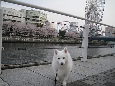 桜2009.Ⅰ
