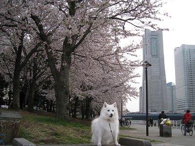 桜2009.Ⅱ