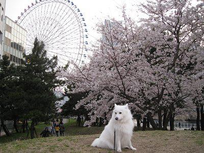桜2009.Ⅲ