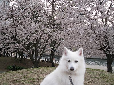 桜2009.Ⅳ