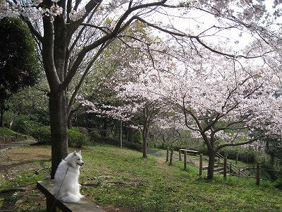 桜2009.Ⅴ