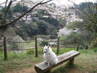桜2009.Ⅵ