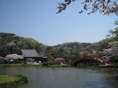 桜の称名寺Ⅰ