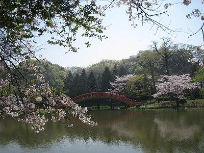桜の称名寺Ⅱ