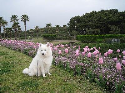 花も犬も!