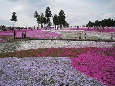 柴桜の丘Ⅱ