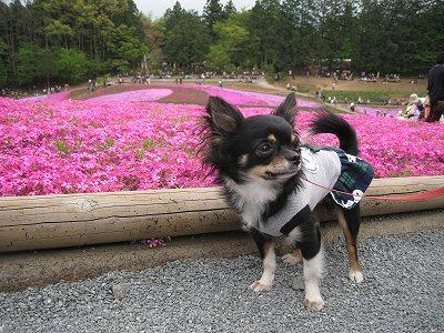 柴桜と礼良Ⅰ