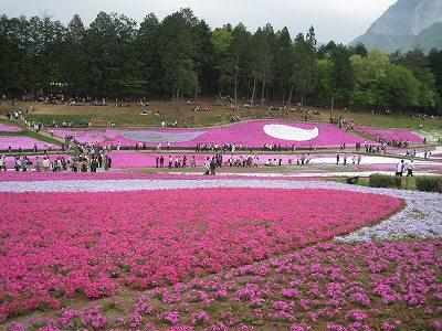 柴桜の丘Ⅲ