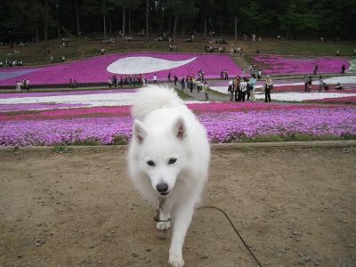 柴桜と百妹Ⅱ